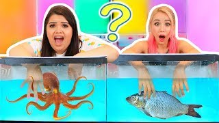 Download WHAT'S IN THE BOX CHALLENGE - UNDERWATER EDITION ft. Wengie Video