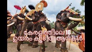 Download Top 10 elephants in Kerala /കേരളത്തിലെ ഉയരം കൂടിയ ആനകള് Video