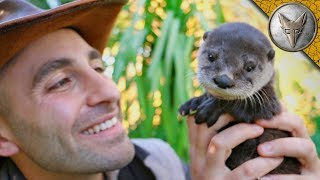 Download Cutest Baby Otter EVER!! Video