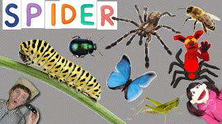 Download First Words #9 SPIDER | Learning 6 Bug Names | Learn English Kids Matt VS Spider Video