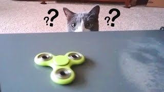 Download Cats Confused by Fidget Spinners Compilation Video