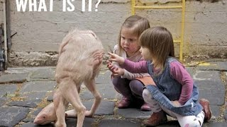 Download ✔ 75 Most Weird, Scary and Rarest Animals in the World Real Pictures (Rare Compilation) Video