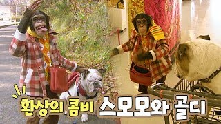 Download 길잃고 자책하는 침팬지와 불독 / 인형뽑기 후 춤추고 / 버스서 졸다 히치하이킹까지!! Video