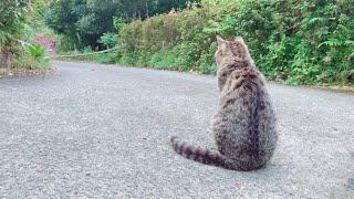 Download ひたすら犬の帰りを待っている猫 Cat waiting for dog's return Video