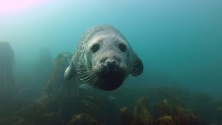 Download GoPro: Seal Belly Rub Video