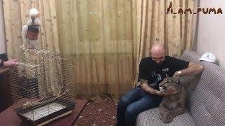 Download Встреча года: пума Месси и говорящий попугай Савелий Video