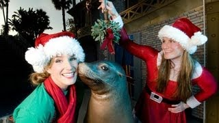 Download ♥♥ Clyde and Seamore Save Christmas Sea Lion Show at SeaWorld Video