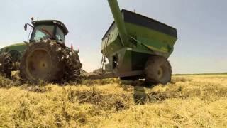 Download Rice Harvest 2014- Grosse Savanne Video