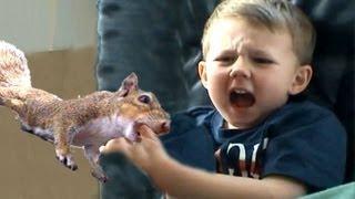 Download Squirrel Attacks My Son Video