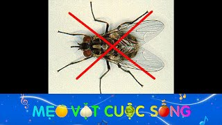 Download Mẹo đuổi và diệt ruồi cực hiệu quả Video
