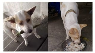 Download Tua Plu The Stray Dog Keeps Bringing Gifts To A Woman That Fed Him Video