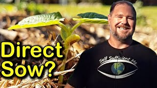 Download Pros & Cons of Direct Sowing Seed Straight into the Garden Bed Video