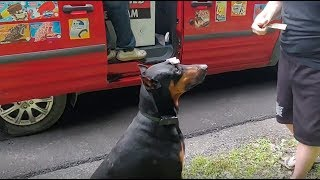 Download Doberman excited for ice cream truck, does tricks for popsicle Video