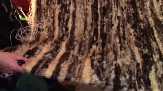 Download Making A Raw Wool Rug On A Hand Loom Video