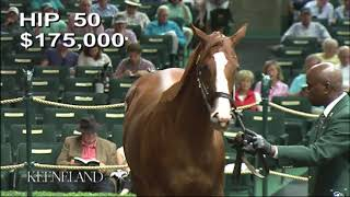 Download Justify as a Keeneland September Yearling Video