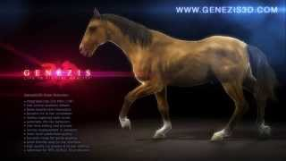 Download Animated CG Horse - GENEZIS 3D Video