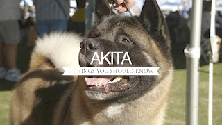 Download AKITA FIVE THINGS YOU SHOULD KNOW Video