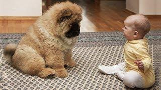 Download 【面白い動画】 かわいい猫 - かわいい犬 - 最も面白いペットの動画 #16 Video