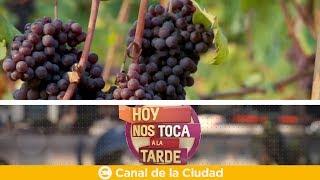 Download Hoy es el Día Mundial del Malbec: El varietal argentino por excelencia en Hoy nos toca a la Tarde Video