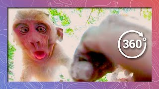 Download Long-tailed Macaques (Monkeys) | Wildlife in 360 VR Video