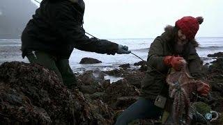 Download The Hunt for Elusive Octopus | Alaska: The Last Frontier Video