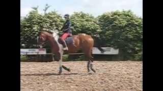 Download skewbald show horse Video