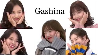 Download [TWICE/트와이스]TWICEメンバーのGashina(가시나) Video