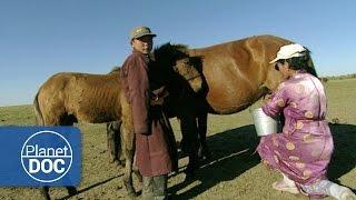 Download Gengis Khan. Nómadas del Desierto | Cultura - Planet Doc Video