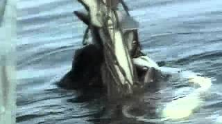Download Cape Cod Fishing Industry Documentary Trailer (Fishtown Educational Series) Video