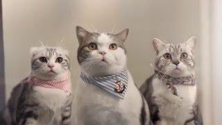 Download Mèo mập và đồng bọn - Quảng cáo Thái Lan hài hước và dễ thương! Video