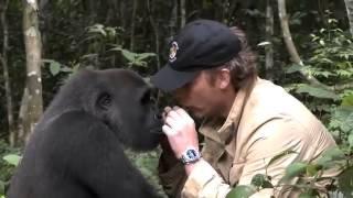 Download Gorilla ziet na 5 jaar zijn verzorger weer Video