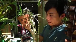 Download Orchid | chia sẻ kinh nghiệm trồng phong lan - trúc phật bà | experience grow dendrobium orchids Video