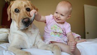Download Дети и животные 2016 Video