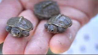 Download 12 Most UNUSUAL Turtles Video