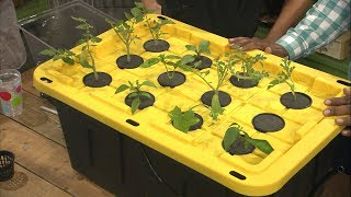 Download Building an Inexpensive Hydroponics/Aeroponics System Video