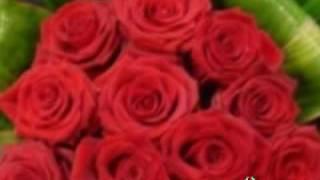 Download ไก่ พรรณนิภา - กุหลาบแดง..flv Video