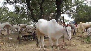 Download india bull market 2015 Video