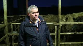Download Finishing steers at Newford Farm Video