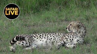Download safariLIVE - Sunset Safari - July 16, 2019 Video
