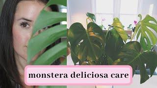 Download Monstera Deliciosa Care Video