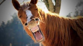 Download Funny Horses 🐴🐴 Funny Horses Moments And Fails (Part 2) [Funny Pets] Video