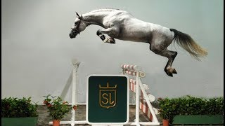 Download Funny And Cute horse horse jump fence #08 Video