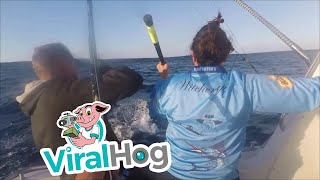 Download Blue Marlin Outsmarts Fisherman Video