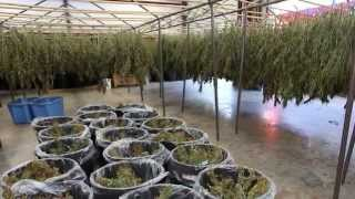 Download Pro Tips for Proper Drying and Curing Video