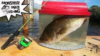 Download Catching Exotic FISH for Aquarium PET   Monster Mike Fishing Video