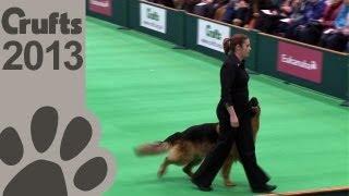 Download Obedience Dog Championships - Day 3 - Crufts 2013 (Jenny Gould & Zankanja Bitter 'N' Twisted) Video