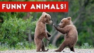 Download Funniest Animal Clips, Moments & Bloopers of November 2016 Weekly Compilation | Funny Pet Videos Video