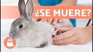 Download 5 síntomas de que un conejo va a morir Video
