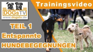 Download Hundebegegnungen Teil 1 / Entspannt an Hunden vorbeigehen / 4 Dinge die du wissen solltest Video