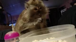 Download Angel Bullock Enjoying Popcorn Movie Night Video